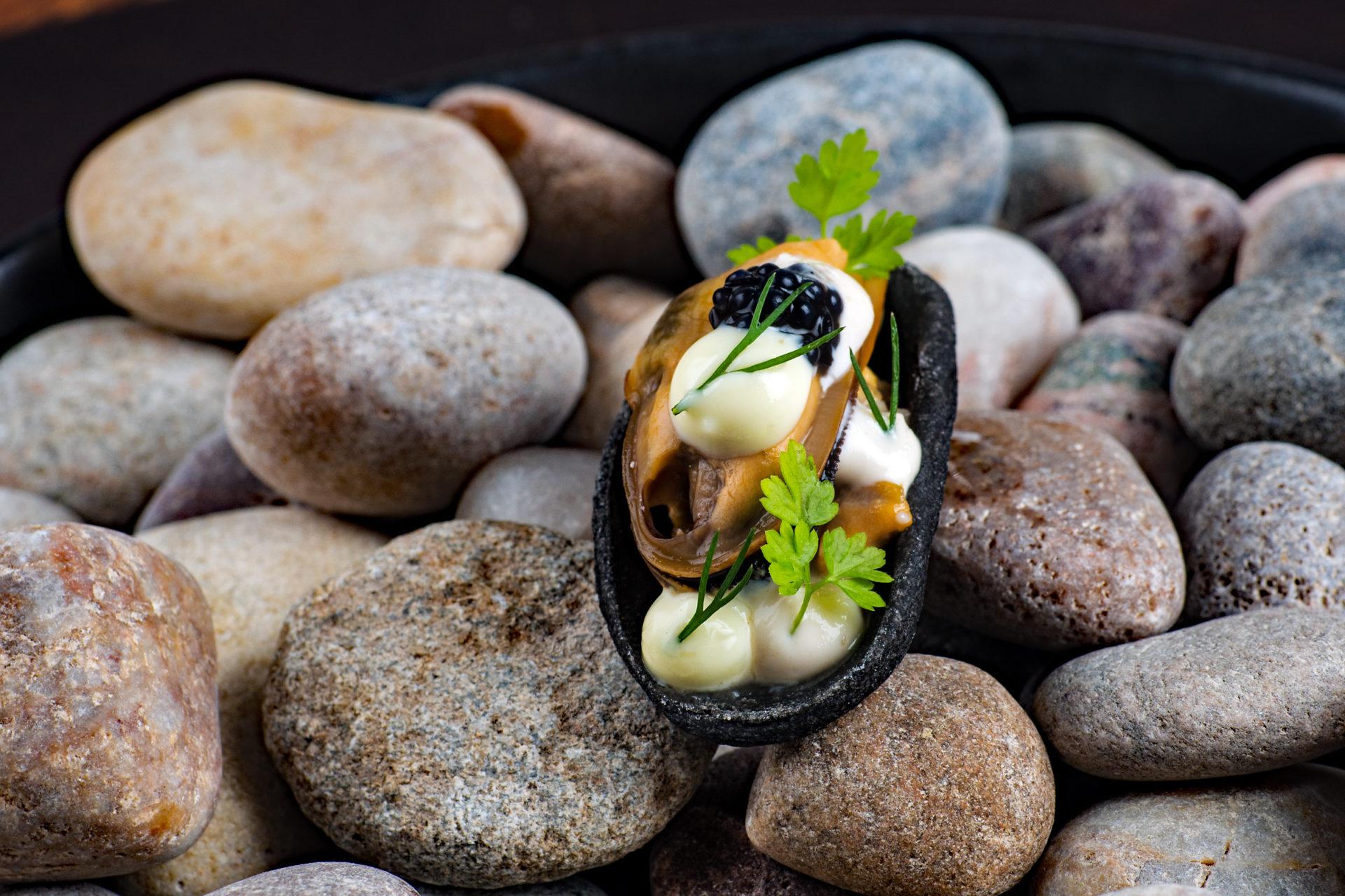 Condita mussel